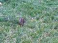 Bunny (27675202) (2).jpg