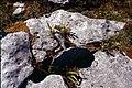 Burren-18-Fels-Pflanzen-1989-gje.jpg