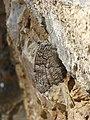 Butterfly 1400034 Nevit.jpg