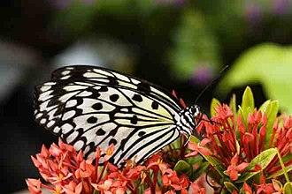 New Brunswick Botanical Garden - Butterflies of the World