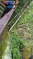 By ovedc - Thunderbird Falls - 03.jpg