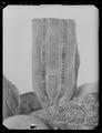 Byxor av guldlamé helt täckt av guldbroderi - Livrustkammaren - 79627.tif