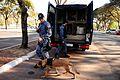 Cães da Polícia Militar são treinados para reforçar segurança na Olimpíada (28259831426).jpg