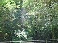 CASCATA DELLE MARMORE - panoramio.jpg