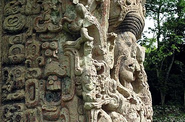 Intricately carved portrait of a human face looking to the right, seen almost in profile against a background of trees. The face is surrounded by highly ornate interlocking designs.