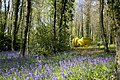 CSF-Cragg-Declination-bluebells-1.jpg