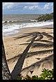 Cairns Clifton Beach coconut tree shadows-1 (4953304423).jpg
