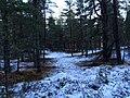Caledonian Forest near Boat of Garten - panoramio.jpg