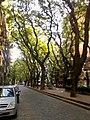 Calle Olleros 1800.jpg