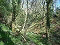 Castle Rings, Donhead St Mary 05.JPG