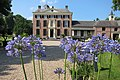 Castle Rozendaal with nice Agapanthus flowers along the entrance road - panoramio.jpg