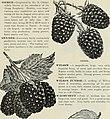 Catalogue fruit, ornamental trees, shrubs, roses, bulbs, etc. (1899) (19934935283).jpg