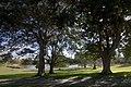 Centennial Park NSW 2021, Australia - panoramio (10).jpg
