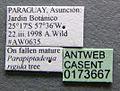Cephalotes bruchi casent0173667 label 1.jpg