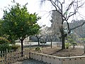 Cerry tree and orange tree at kanneiji temple -寛永寺のみかんの木としだれ桜 - panoramio.jpg