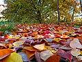 Cherry leaves 02.jpg