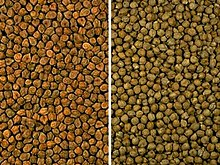 Left: Bengal variety; right: European variety