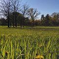 Chisinau Dendrarium - fresh green grass.jpg