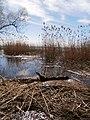 Chornobaivs'kyi district, Cherkas'ka oblast, Ukraine - panoramio (103).jpg