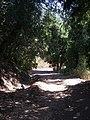Cipreses. - panoramio (1).jpg