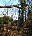 Clandeboye Avenue, Helen's Bay (4) - geograph.org.uk - 687379.jpg