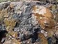 Clast-rich impact pseudotachylite (Sudbury Breccia, Paleoproterozoic, 1.85 Ga; Windy Lake Northwest roadcut, Sudbury Impact Structure, Ontario, Canada) 38 (33862773168).jpg