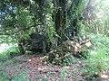 Clogher Portal Tomb.jpg