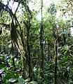 Cloud forest Ecuador.jpg