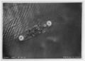 Coast Battleship No. 4 - NH 93549.tiff