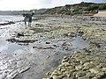 Coastal walk from Bembridge - geograph.org.uk - 1752823.jpg