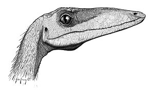 Coelophysis - C. bauri profile