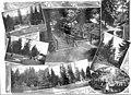Collage with scenes around City Park, Portland, Oregon, 1905-1916 (AL+CA 4737).jpg