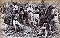 Collectie Nationaal Museum van Wereldculturen TM-60061660 Arbeiders in een suikerrietveld Jamaica.jpg