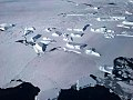 Collection of icebergs (26376305128).jpg