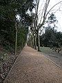 Collserola - Passeig dels Plàtans P1170620.jpg