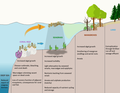 Consequences of eutrophication on coral reef, seagrass and mangrove ecosystems.png