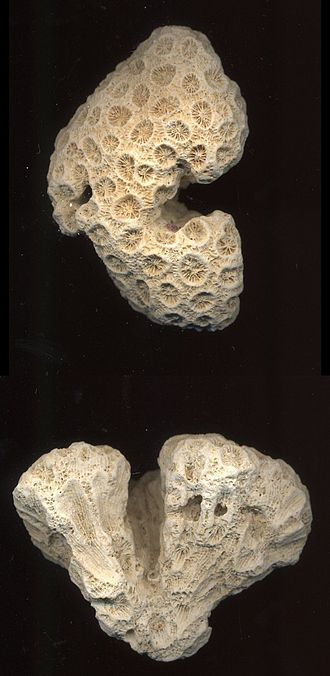 Live rock - Bleached coral skeletons, which can be inhabited by micro- and macro-organisms to form live rock