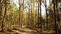 Corbett National Park, India 3.jpg