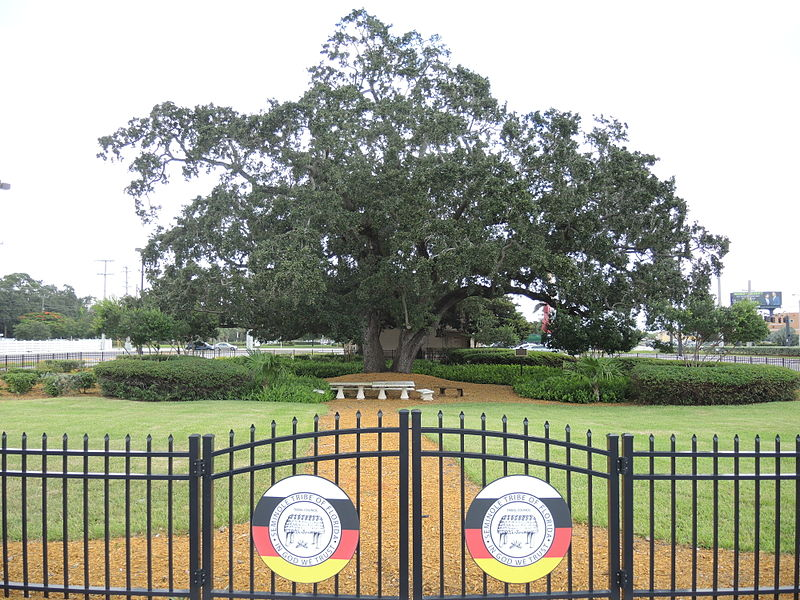 File:Council Oak Tree Site on the Hollywood Seminole Indian Reservation 04.JPG