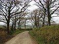 Country lane - geograph.org.uk - 595745.jpg