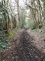 Country path - geograph.org.uk - 1774900.jpg