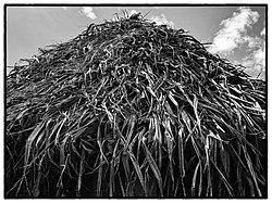Couverture de feuilles de pandanus d'un fale familial à Vaisei, Sigave, Futuna, 2017.jpg