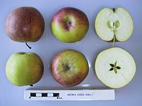 Cross section of Ariwa, National Fruit Collection (acc. 2002-040).jpg