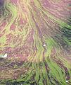 Cyanobacteria 033.jpg