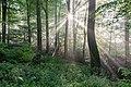 Dülmen, Rorup, NSG Roruper Holz -- 2021 -- 8187-91.jpg