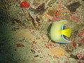 DSC00252 - peixe - Naufrágio e recifes de coral no Nilo.jpg