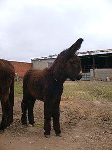 Protection de l'âne dans ANE