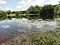 Davidson Mill Pond Park, South Brunswick, New Jersey USA July 15th, 2013 - panoramio (12).jpg