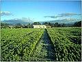 December Frost - Master Landscape Rhine Valley 2013 - panoramio.jpg