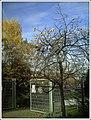 December Khakipflaume Botanischer Garten Freiburg - Botany Photography 2012 - panoramio.jpg